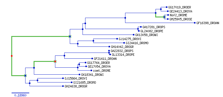 phylo_tree.png (Phylogenetic tree)