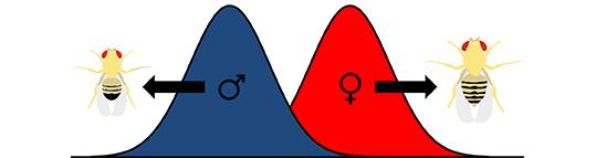 UVA sex kultur dating din fetter i loven