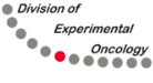 Division of Experimental Oncology